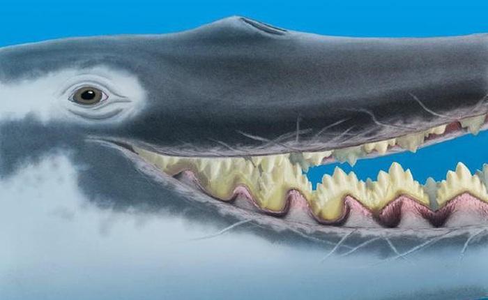 Cá voi răng vương miện: Làm sáng tỏ điểm khởi đầu của sự tiến hóa của cá voi tấm sừng