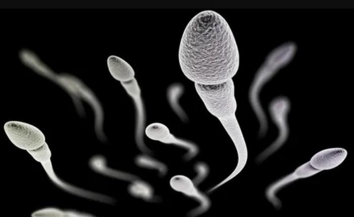 Các nhà khoa học đã có thể nuôi cấy thành công tinh trùng người từ tế bào gốc tinh trùng