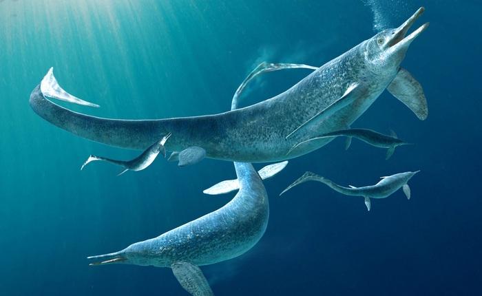 Hóa thạch tiết lộ loài bò sát săn mồi tối thượng trong thời đại khủng long