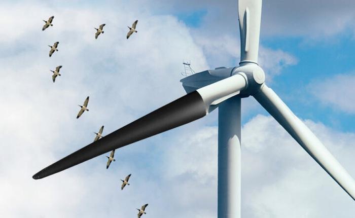 Nauy sơn đen cánh quạt tuabin điện gió vì chim đua nhau cắm đầu vào tự tử