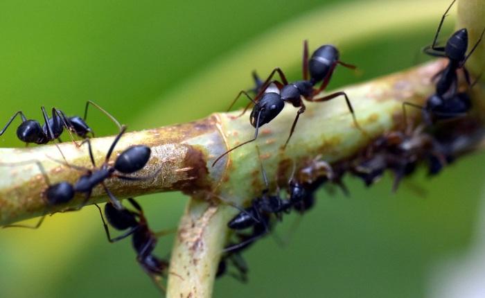 Kiến và ong có thể dạy chúng ta điều gì về cách phòng chống dịch bệnh?