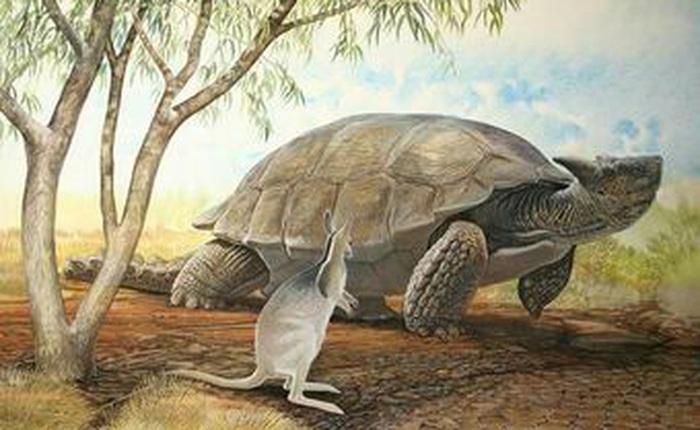 Những loài động vật tuyệt chủng vì sự thiếu hiểu biết của loài người