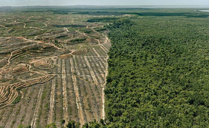 [Video] Kỷ nhân sinh Anthropocene và những vết sẹo con người rạch vào Đất Mẹ