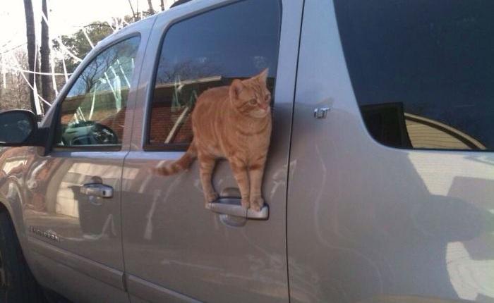 Chùm ảnh vui: Những hành động kỳ lạ đến không tưởng của loài mèo khiến các định luật vật lý trở nên vô nghĩa