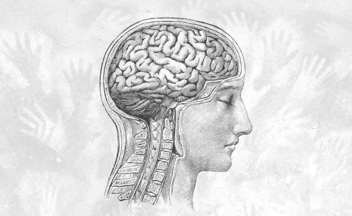 Dữ liệu cho thấy từ Thời Đồ đá tới nay, não con người đang teo nhỏ lại