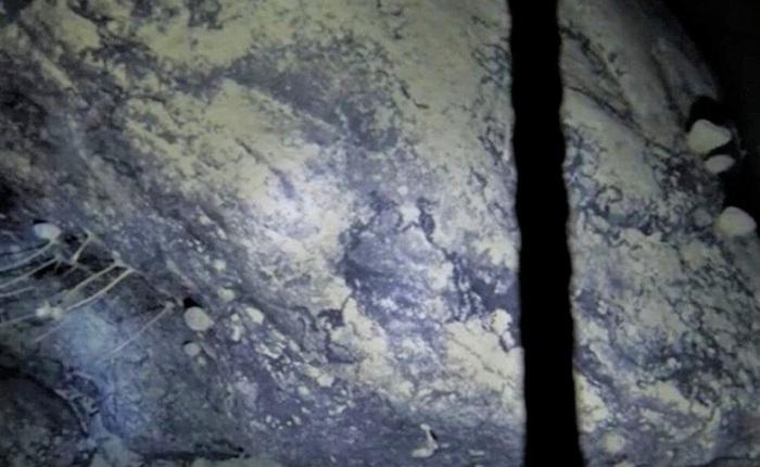 Khoan sâu 900m xuống lớp băng Nam Cực, các nhà khoa học bối rối khi phát hiện sinh vật kỳ lạ chưa từng được biết đến