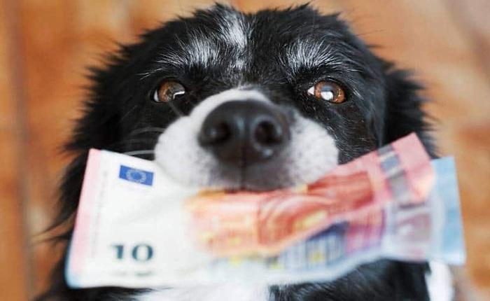 Một con chó ở Mỹ vừa nhận được khoản tiền thừa kế 5 triệu USD