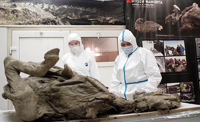 """Nga """"truy tìm"""" virus thời tiền sử trong xác ngựa bị chôn vùi 4500 năm dưới băng vĩnh cửu"""