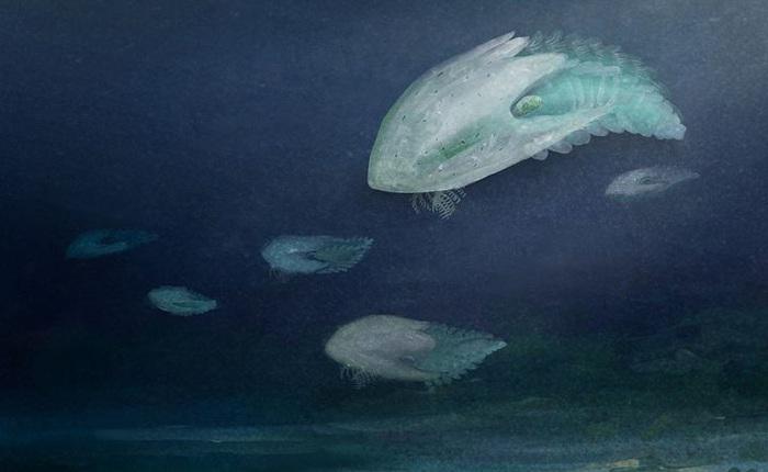 """Phát hiện loài quái vật """"khổng lồ"""" hơn 500 triệu năm tuổi có thân hình giống như một con tàu vũ trụ"""