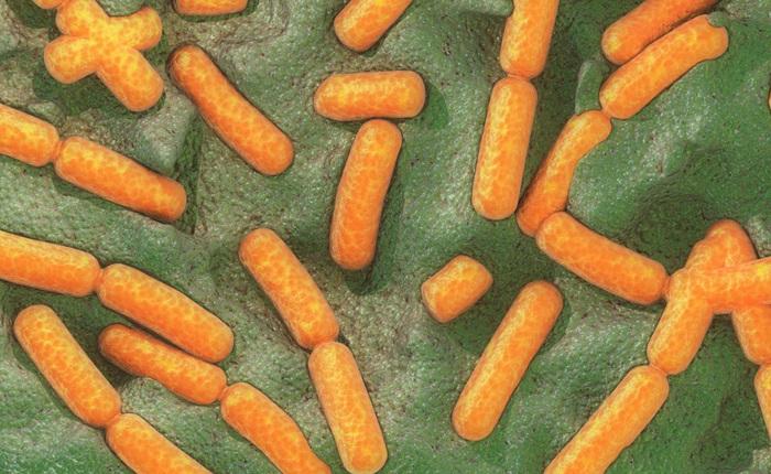 Lần đầu tiên các nhà khoa học quan sát thấy vi khuẩn sử dụng hiệu ứng lượng tử để tồn tại