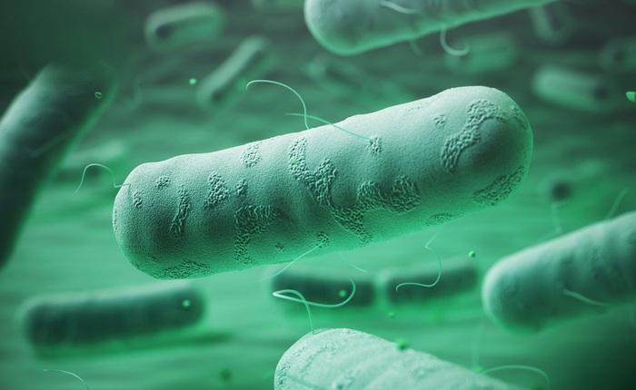 Tìm thấy loài vi khuẩn 'biến dạng' qua 10 thế hệ để chống chọi với thuốc kháng sinh