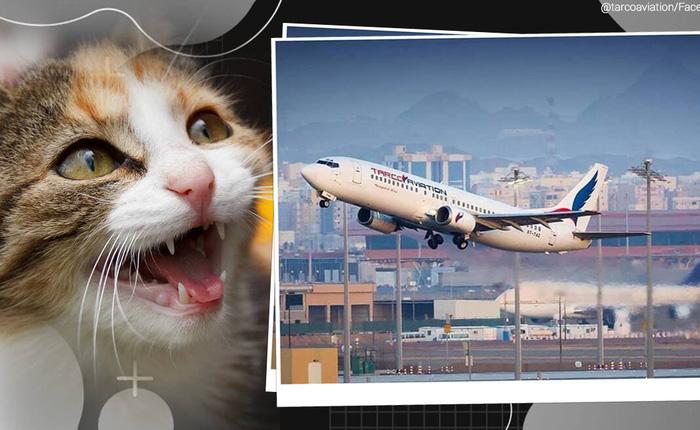 Mèo hoang 'hóa' không tặc: Lẻn vào buồng lái tấn công phi công, ép máy bay quay đầu
