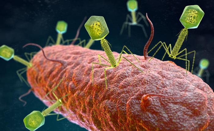 """Những virus có bộ gen """"ngoài hành tinh"""" sẽ khiến sách giáo khoa sinh học phải được viết lại"""