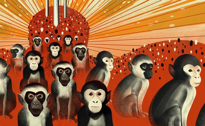 Đại dịch COVID-19 khiến Trung Quốc hết sạch khỉ để thí nghiệm