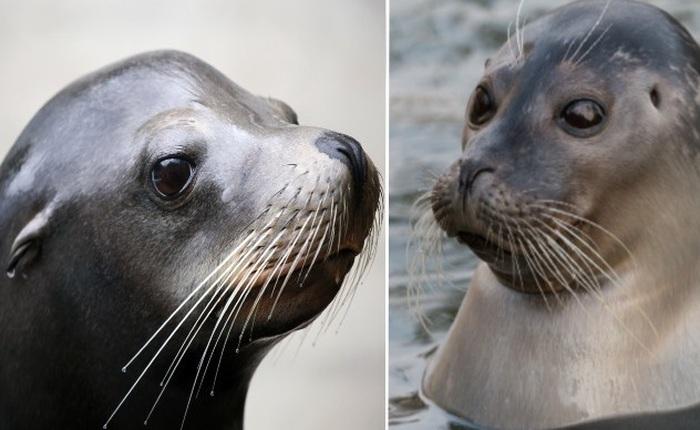 Những loài động vật mới nhìn qua có thể bạn sẽ nhầm lẫn chúng với nhau