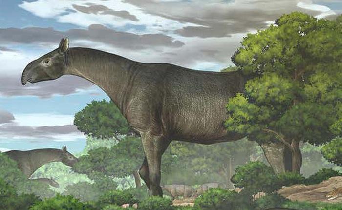 Tê giác khổng lồ được khai quật ở Trung Quốc là một trong những loài động vật có vú lớn nhất từng sống trên Trái Đất