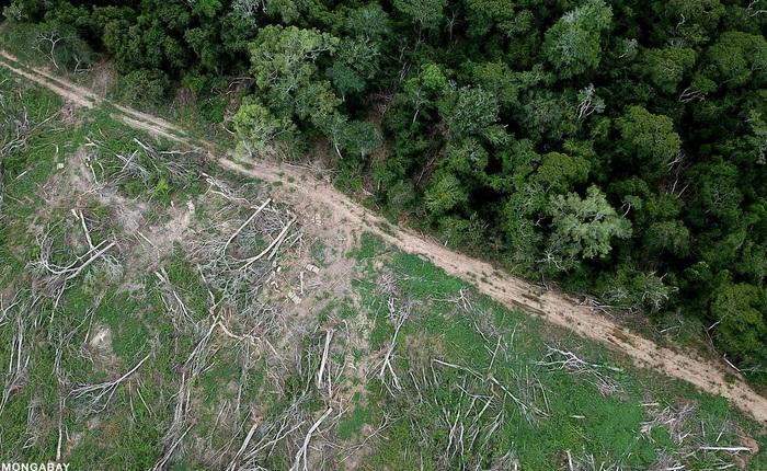 Chỉ với 4 thập kỷ khai phá, con người đã chấm dứt 55 triệu năm hấp thụ carbon của rừng Amazon