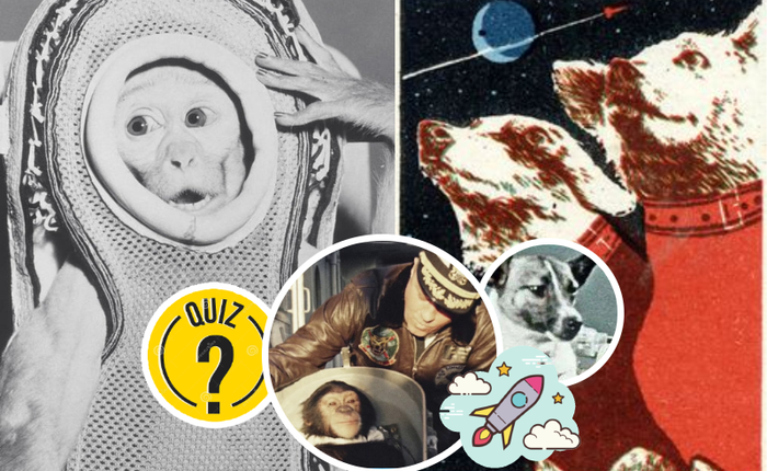 Quiz Vũ trụ: Boss Mèo đầu tiên bay vào vũ trụ tên là gì?