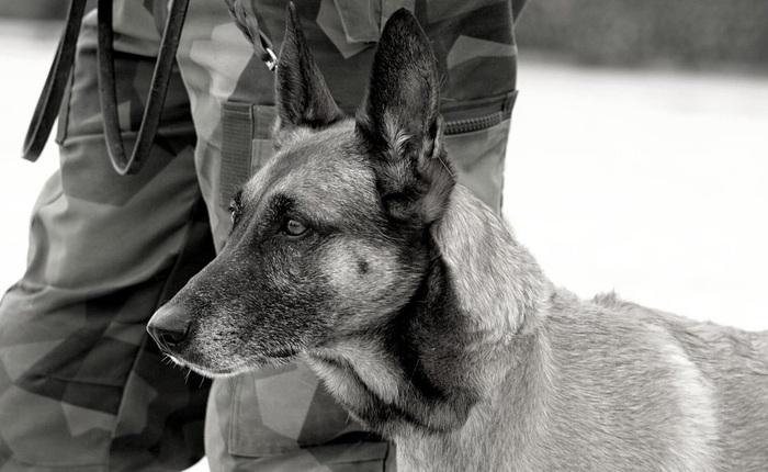 """American Humane: Những con chó phục vụ bị quân đội Mỹ bỏ lại ở Afghanistan sẽ phải chịu số phận """"tệ hơn cái chết"""""""
