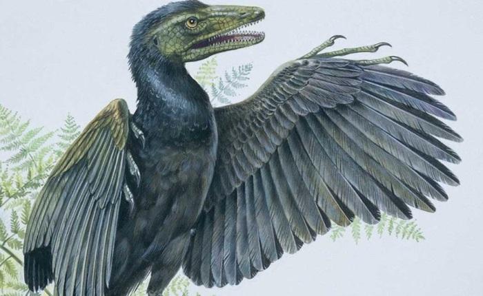 Các nhà khoa học Mỹ giải thích tại sao chim là hậu duệ duy nhất của khủng long còn sống sót trên Trái Đất