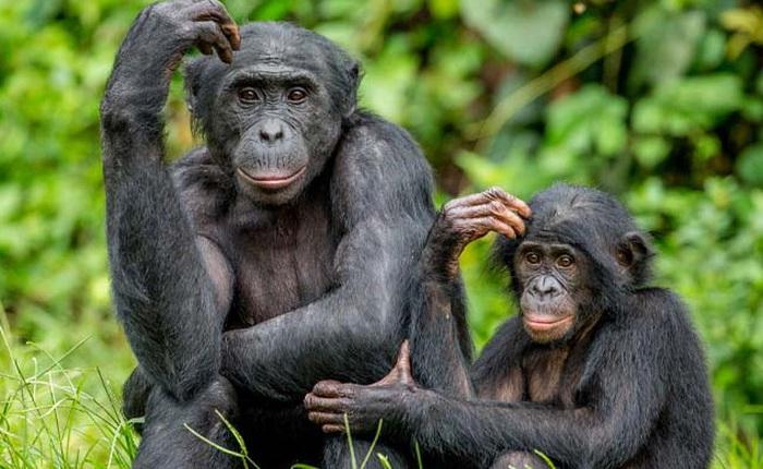 Những sự thật lạ lùng về các loài động vật mà bạn không hề hay biết!