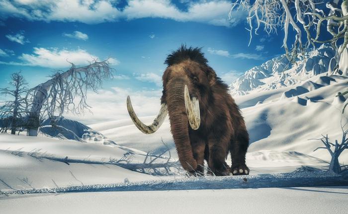 Các nhà khoa học đặt mục tiêu hồi sinh voi ma mút vào năm 2025