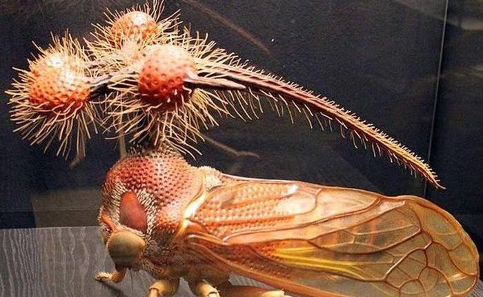 Rầy vằn Brazil - Sinh vật trông giống người ngoài hành tinh nhất trên Trái Đất