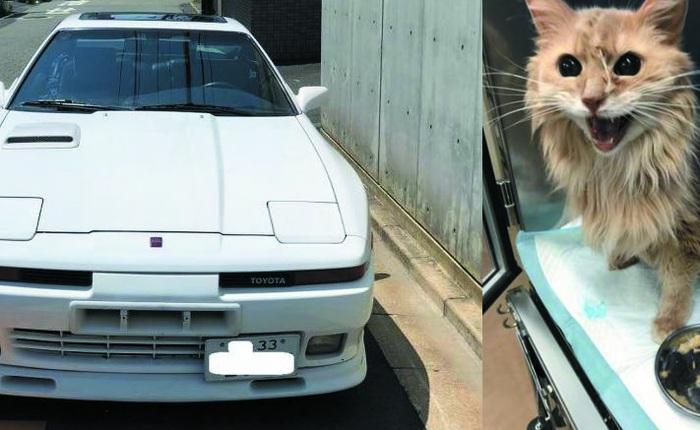 Dứt ruột bán xe cổ để cứu mèo cưng bị bệnh hiểm nghèo, chủ nhân nhận lại bất ngờ từ người mua giấu mặt