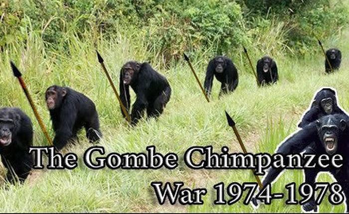 Chiến tranh tinh tinh: Vì tranh giành quyền lực mà những con tinh tinh này đã tổ chức một cuộc chiến đẫm máu kéo dài 4 năm