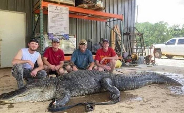 Phát hiện cổ vật 8.000 năm tuổi của người Mỹ bản địa trong bụng của một con cá sấu ở Mississippi