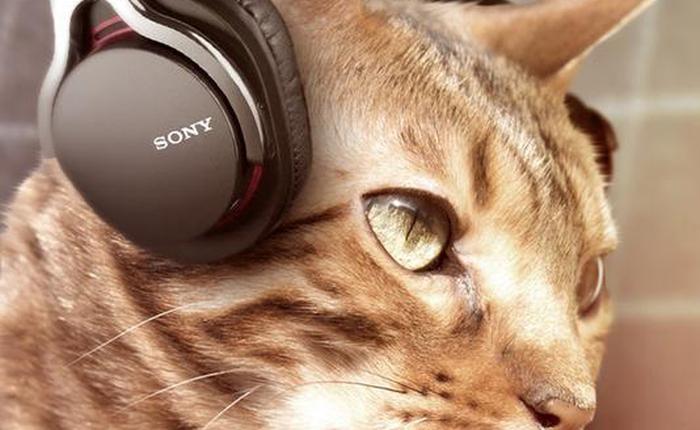 Chùm ảnh vui: Khi chó mèo nhà bạn cũng biết dùng đồ công nghệ