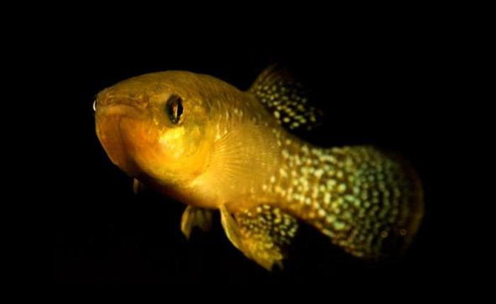 Phái Ngũ Độc bó tay: những con cá đột biến này kháng độc gấp 8.000 lần mức thông thường
