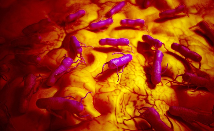 Vi khuẩn gây ngộ độc lại có thể báo hiệu khối u ung thư, giúp hệ miễn dịch tiêu diệt bệnh
