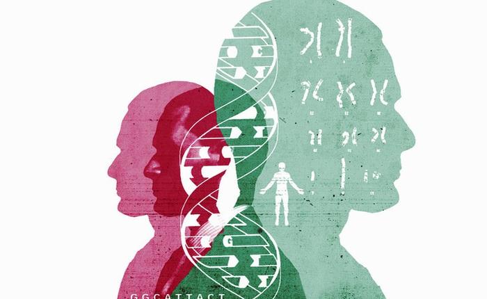 Từ ghép tinh hoàn dê sang người đến phôi thai nửa người nửa lợn: Đây chính là quá khứ và tương lai của cấy ghép dị chủng