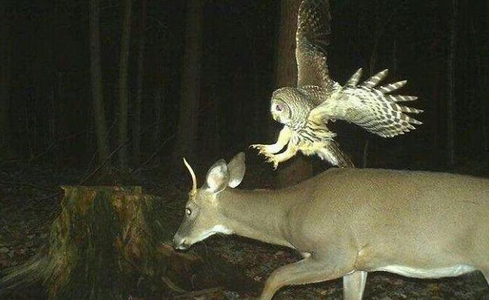 [Vui] Hóa ra động vật hoang dã cũng hư hỏng chẳng kém gì con người