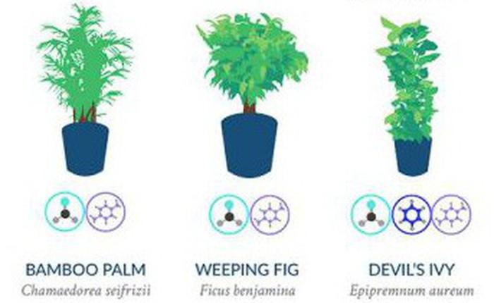Nasa giới thiệu 17 loại cây cảnh giúp thanh lọc không khí cực tốt, phù hợp cho ngày Tết