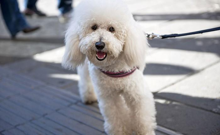 Softbank đầu tư 300 triệu USD vào startup cung cấp dịch vụ dắt chó đi dạo