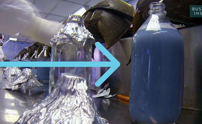 Bạn có tin cái bình nước màu xanh này có giá tới... 300 triệu đồng/lít