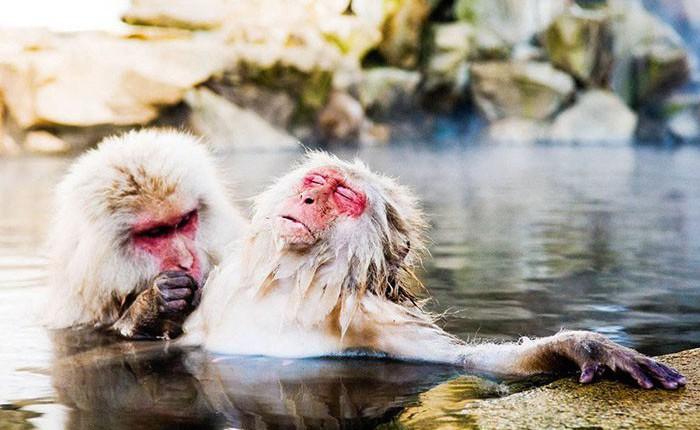 15 khoảnh khắc hài hước nhất năm của động vật hoang dã tại Comedy Wildlife Photography Awards 2018