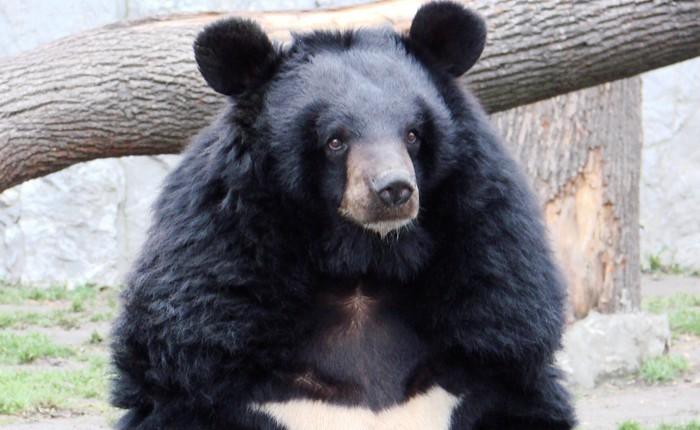 Một người đàn ông Ấn Độ bị cắn xé đến chết vì cố chụp ảnh tự sướng với gấu