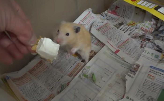 Youtuber Nhật Bản bị dân mạng truy lùng vì đối xử không ra gì với hamster
