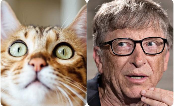 Mèo và các doanh nhân thành đạt: có mối liên hệ rất quái đản mà bạn sẽ không bao giờ nghĩ đến