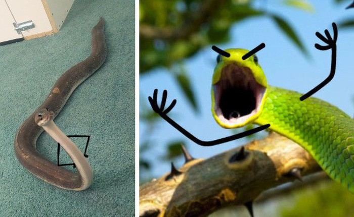 Vẽ rắn thêm chân quả là ngớ ngẩn nhưng vẽ rắn thêm tay lại hay biết mấy