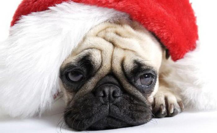 Holiday blue: Trầm cảm ngày lễ là một hiện tượng có thật và khoa học nói gì?