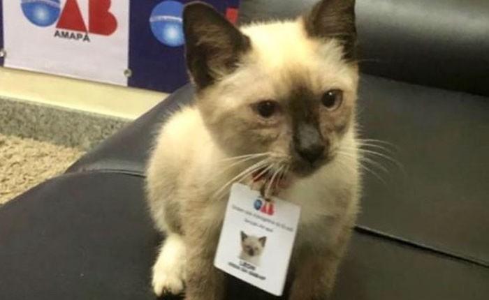 Boss mèo mặt dày lởn vởn ở văn phòng Hiệp hội Luật sư Brazil suốt 1 tuần liền, sau đấy được nhận vào làm chính thức luôn