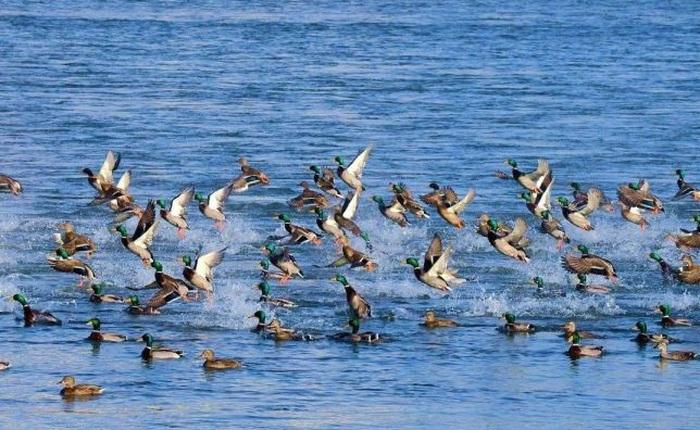 Loài chim di cư có thực sự là do chúng sợ lạnh?