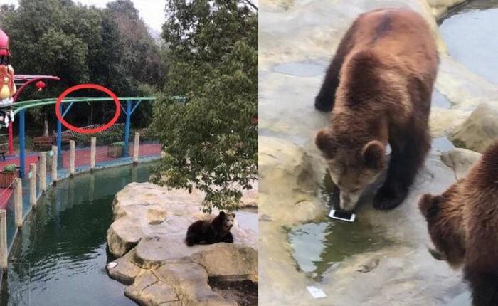 Trung Quốc: Toan ném táo cho gấu ăn, nữ du khách lại ném nhầm iPhone