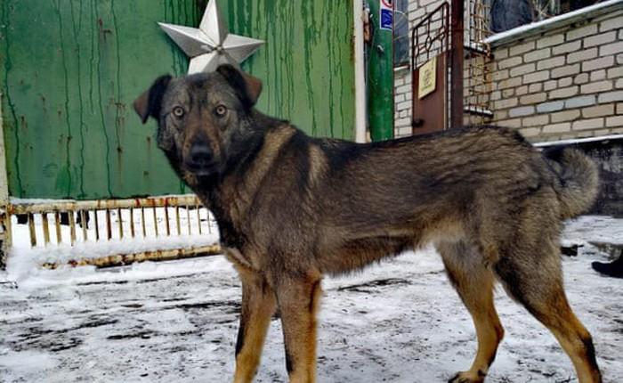 Bang khuyển phóng xạ: Linh vật không chính thức của Chernobyl, khắc họa sự hồi sinh của tự nhiên trong lòng thảm họa