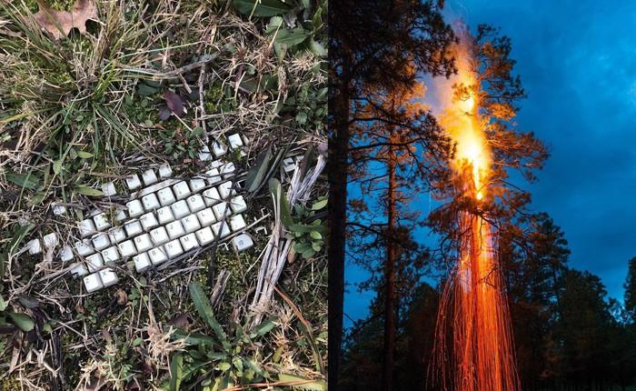 22 thứ kỳ lạ được dân tình phát hiện trong rừng, phải khoe ngay với internet thì mới chịu được