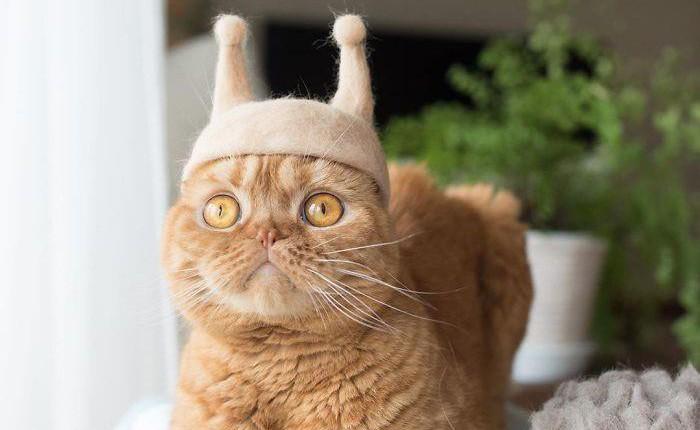 Lại là người Nhật, nhặt lông mèo rụng chế thành những chiếc mũ quý tộc thế này đây